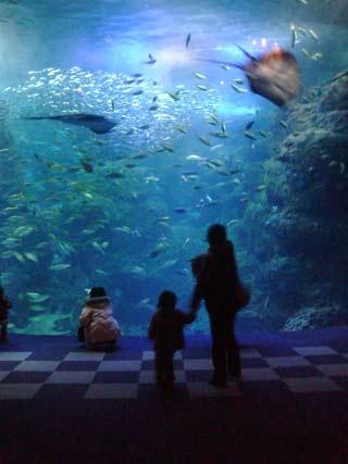 新江ノ島水族館の水槽