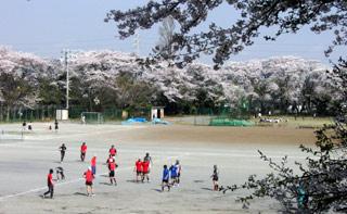 Sakura090407b